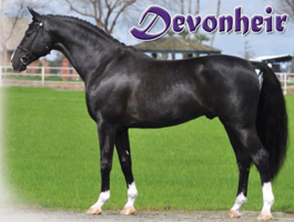 Devon Heir Conformation